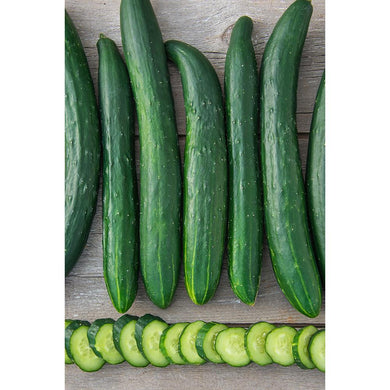 CUCUMBER - TASTY GREEN (SLICING)