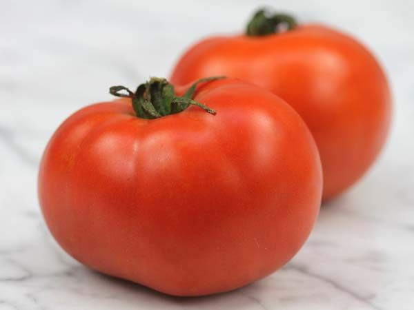 TOMATO - SUB ARCTIC MAXI VEGETABLE PLANT