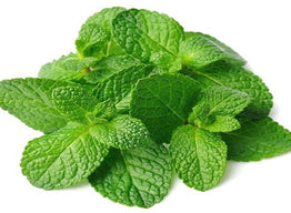 Peppermint herb nutrition facts