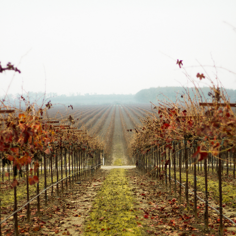 Wine Country in the Fall
