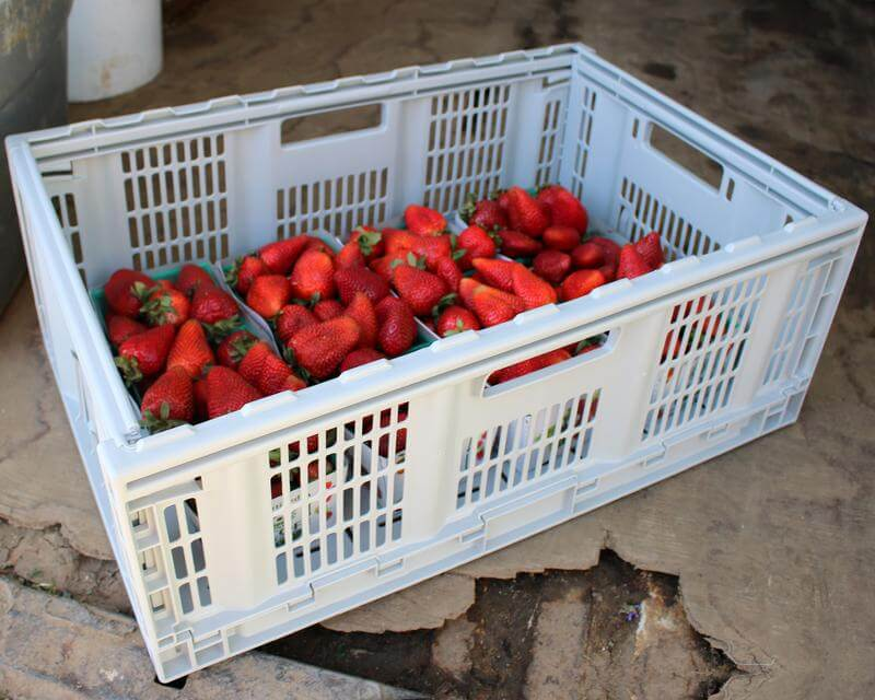 Bushels of strawberries in a CleverCrate® Pro-Grade