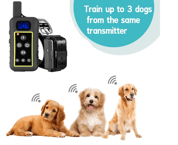 Rechargeable Hunting Dog Training Collar - pethomeus