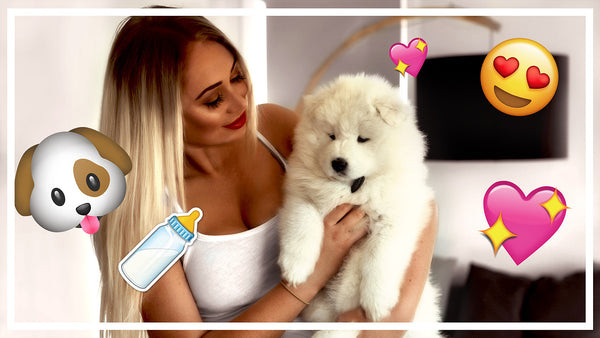 VLOG // Picking up our Samoyed puppy