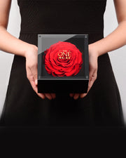 Preserved Fresh Rose - Bright Red - AI LIFE HOLDINGS