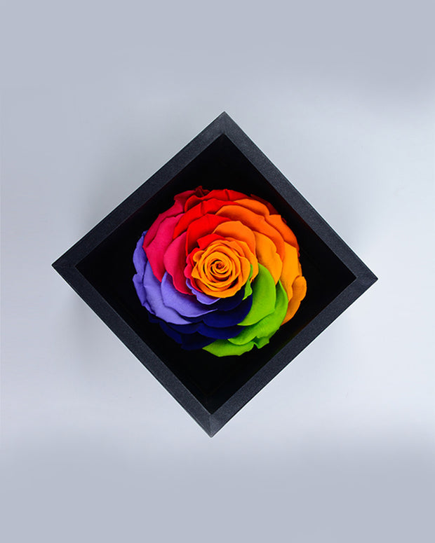 Preserved Fresh Rose - Rainbow - AI LIFE HOLDINGS