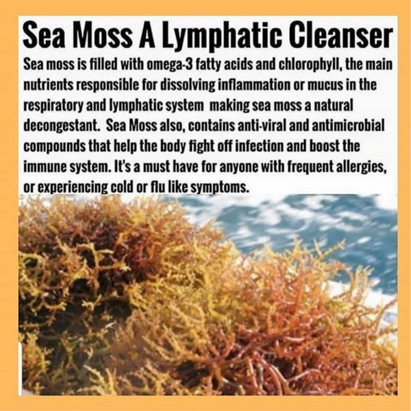 8.oz SEA MOSS INFUSED WITH ELDERBERRY ( ALL NATURAL )