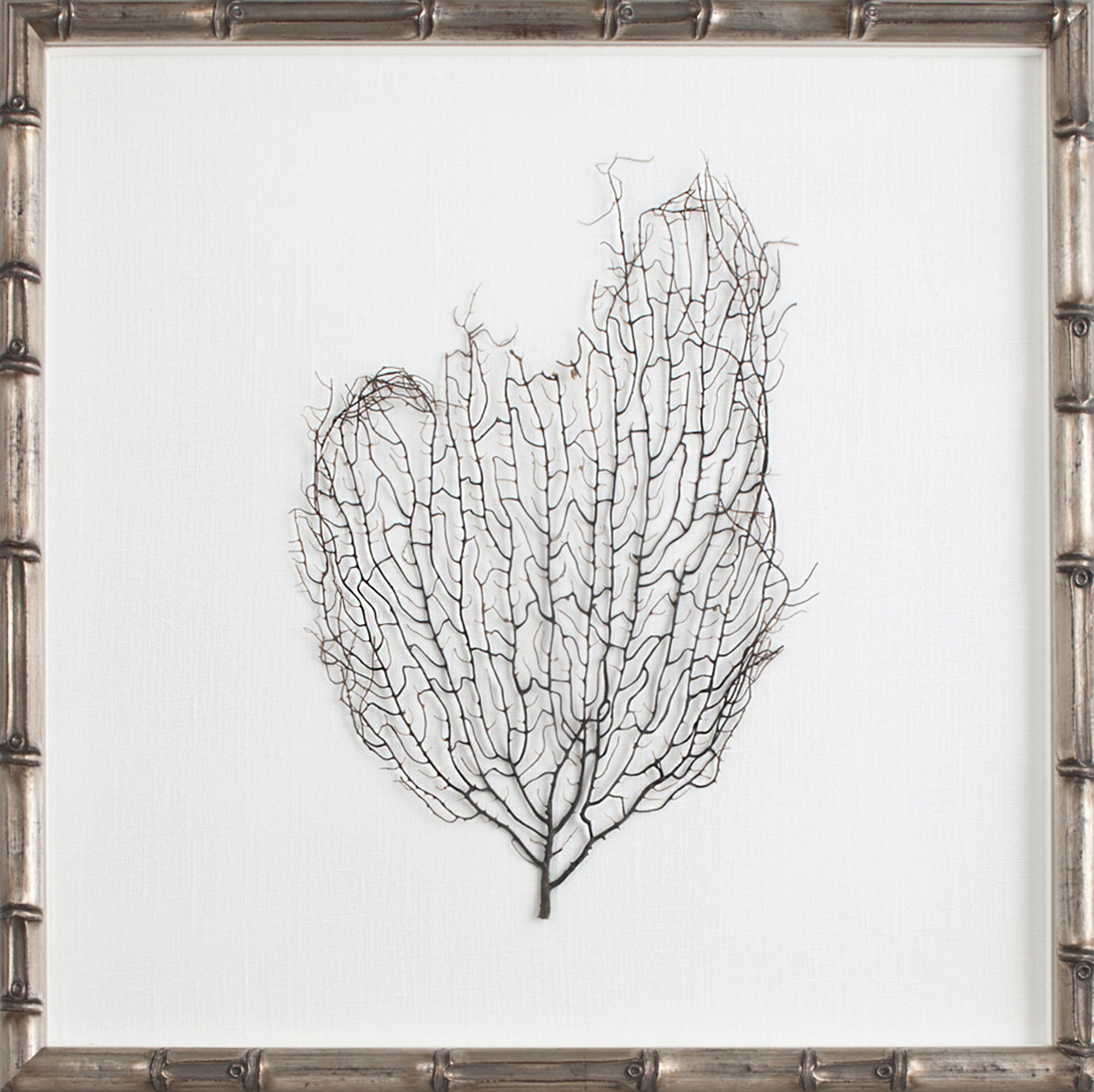 Framed Sea Fan in Silver Frame