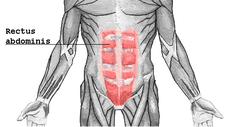 Rectus Abdominis | The 6-Pack!