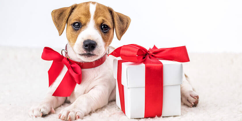 The best gifts for pet lovers