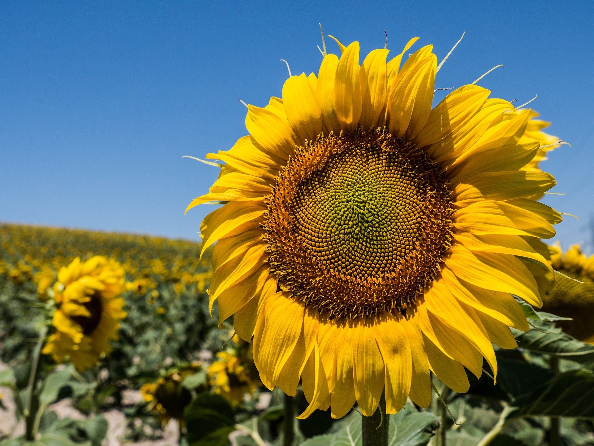Find out if Sunflower and pumpkin seeds help weight loss or not