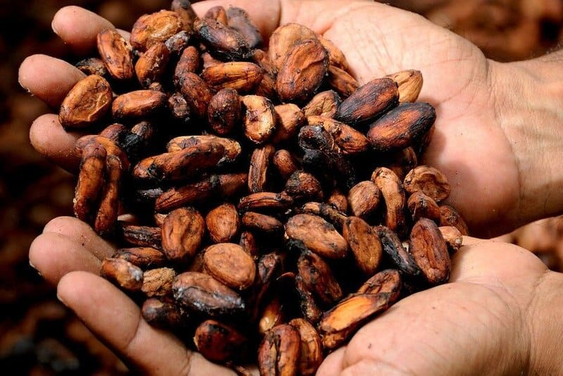 Properties of cocoa butter for cosmetic use