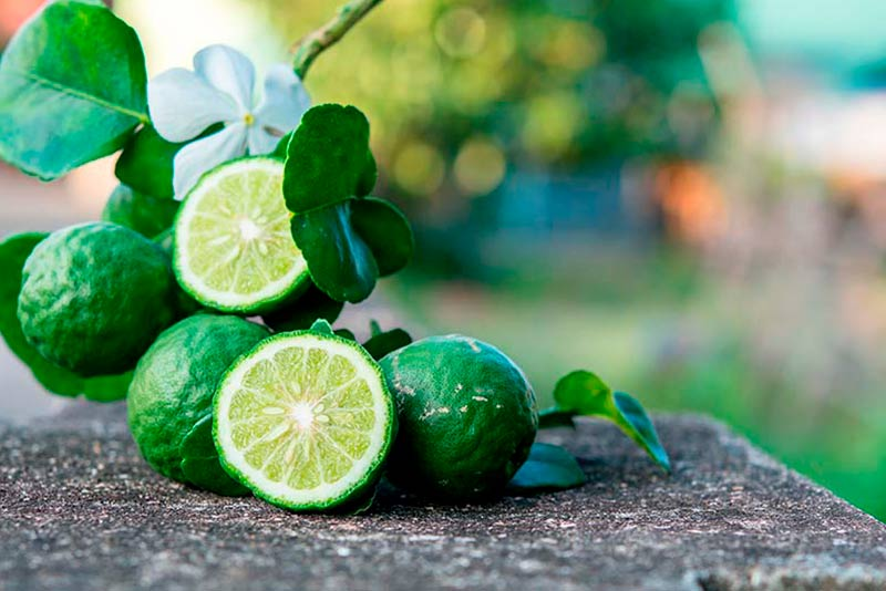 Know what bergamot is and its uses in beauty and health