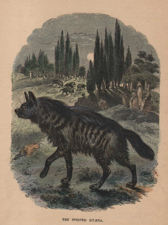 """The Striped Hyena"" from Cassell's Popular Natural History, Vol. I, 1863"