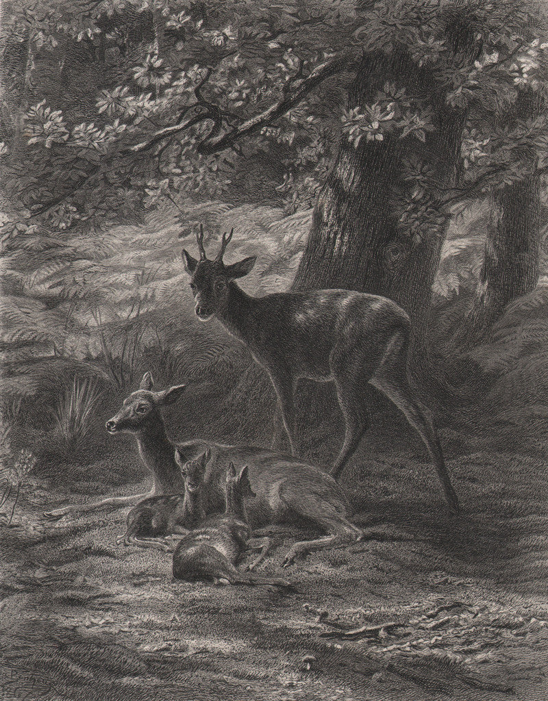 The Resting-Place of the Deer by Bonheur, 1886