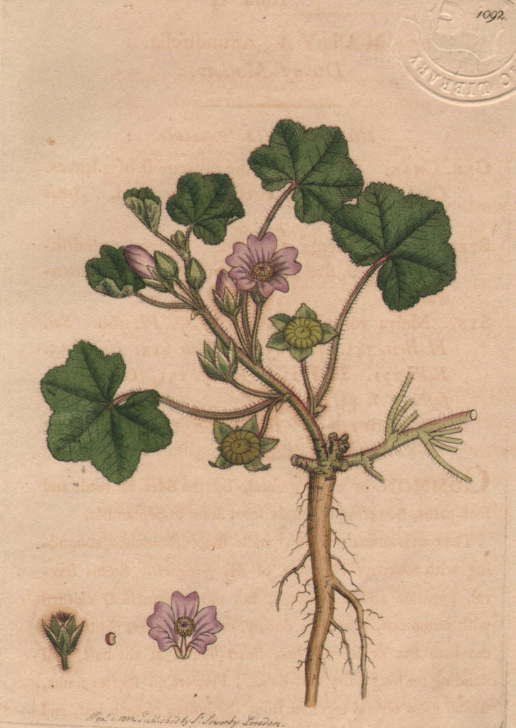 Malva rotundifolia, Dwarf Mallow by Sowerby, 1809