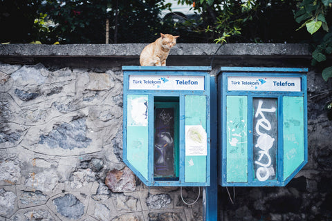 Public telephones with ginger cat