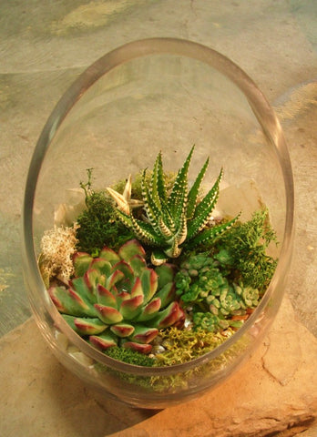 Succulents terrarium (G) with a narrow half moon vase