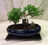 "Juniper 8"" ceramic pot (narrow pot) / come with a rectangular ceramic tray"