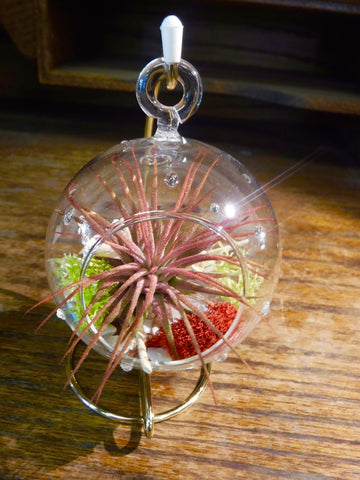 small round hanging terrarium with a stand