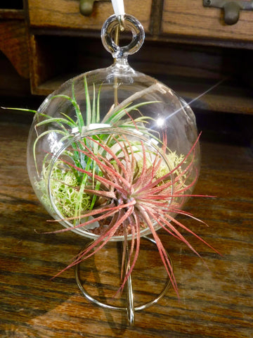 Tillandsia / medium round hanging terrarium with stand