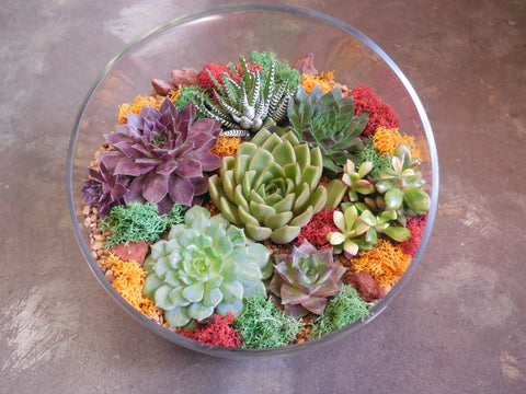 "Succulents terrarium (D) in a 10"" half moon vase ***large***"