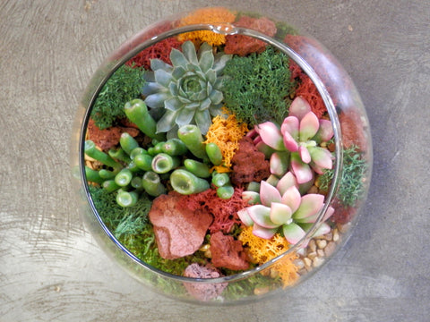 "aa) Succulents terrarium in a 6"" bubble ball glass"