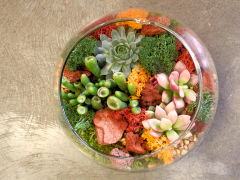 "a) Succulents terrarium in a 6"" bubble ball glass"