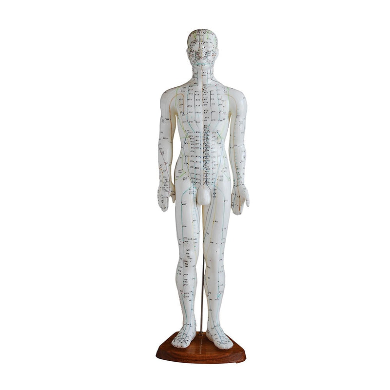 Male Acupuncture Model 60CM