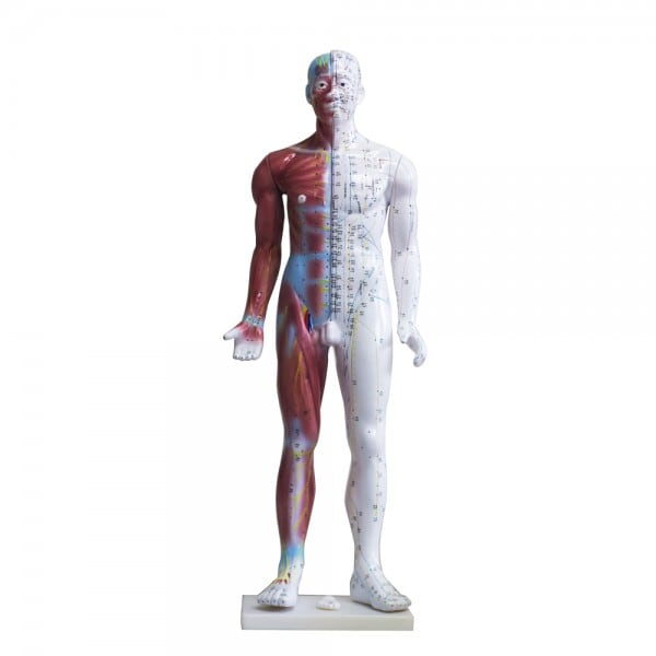 Acupuncture Human Model 33""