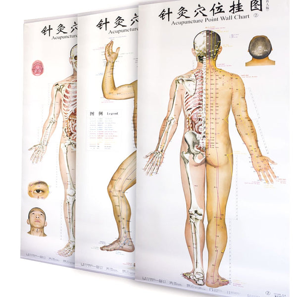 Acupuncture Charts set of 3