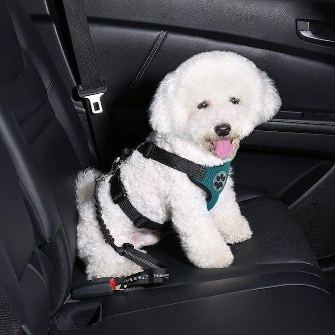 Dog Safety™ Seat Belt