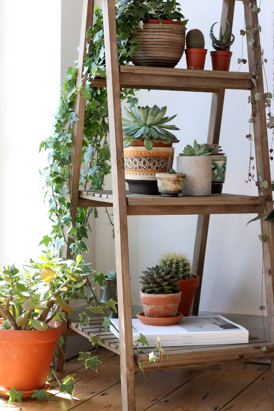 shelved-display-planters