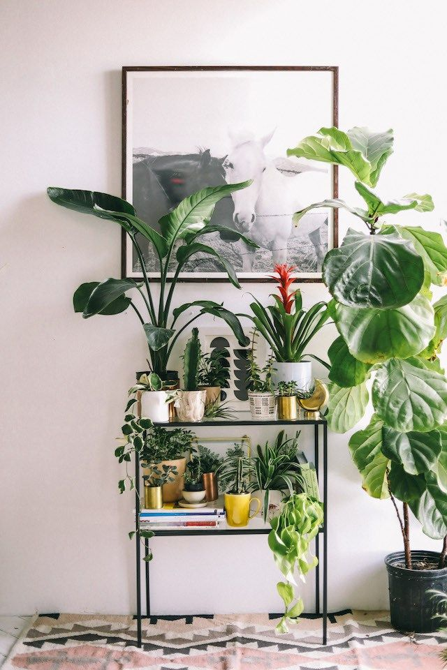 shelved-indoor-garden