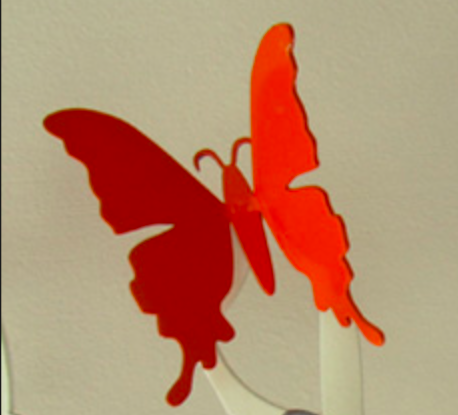 Red-Shortwing Butterfly Fridge Magnet