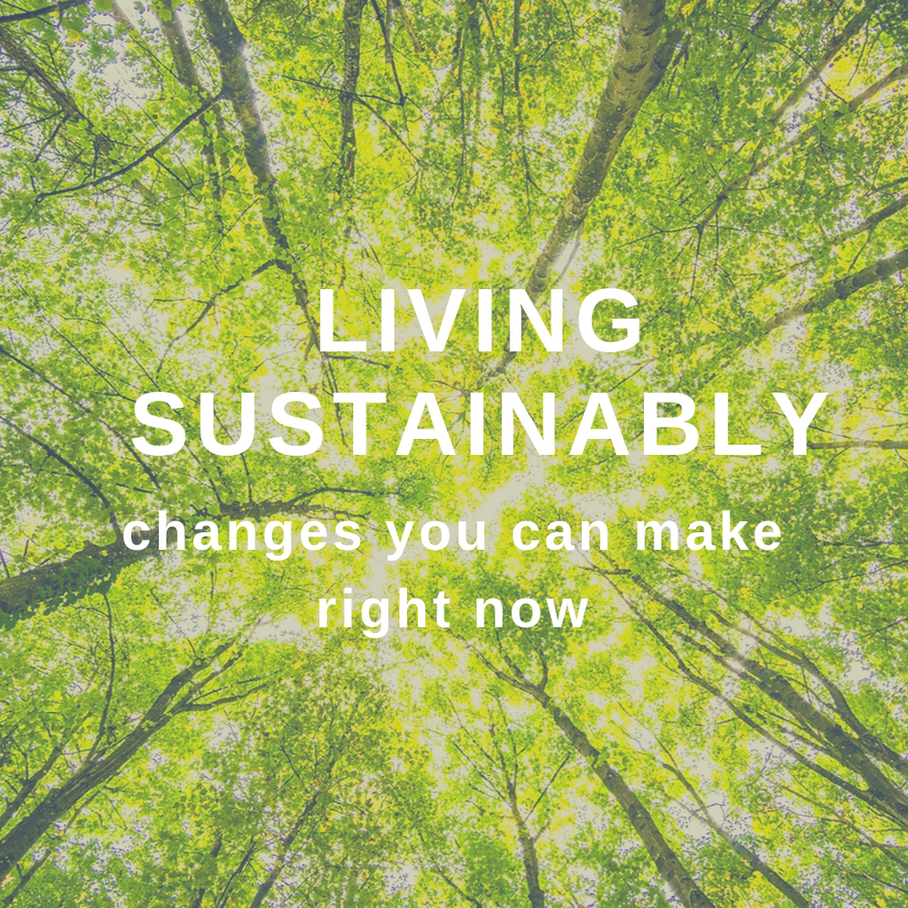 Living sustainably:  changes you can make right now
