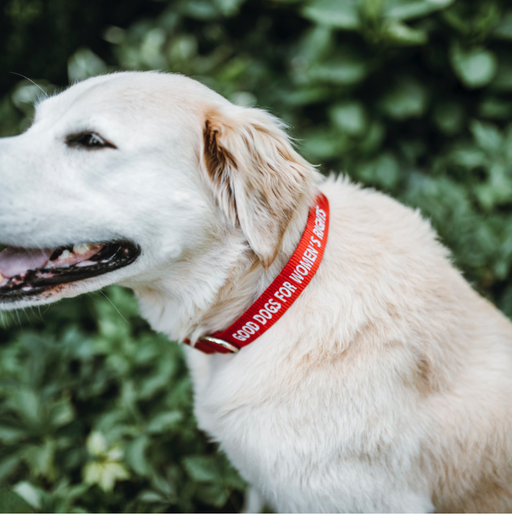 Good Dogs For Women's Rights, Collar