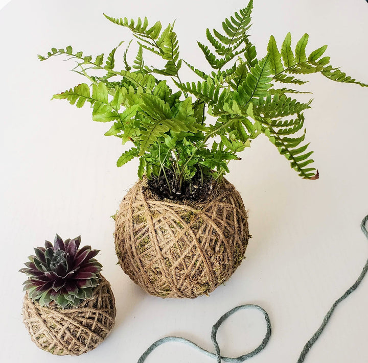 plant workshop kokedama bonsai class