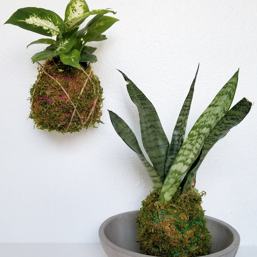 kokedama houseplant workshop portland