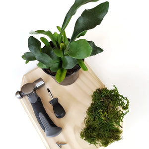 mounted houseplant class in portland