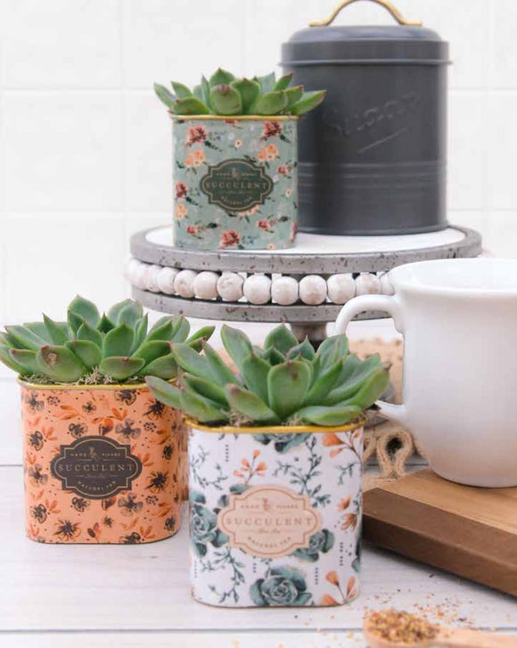 Floral Tea Tin Succulent Planter (3