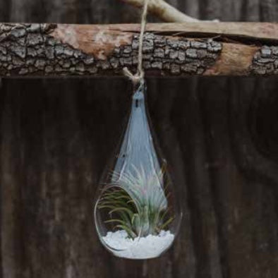 Teardrop Tilly Terrariums
