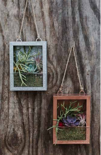 Living Portraits Hanging Succulent Planter