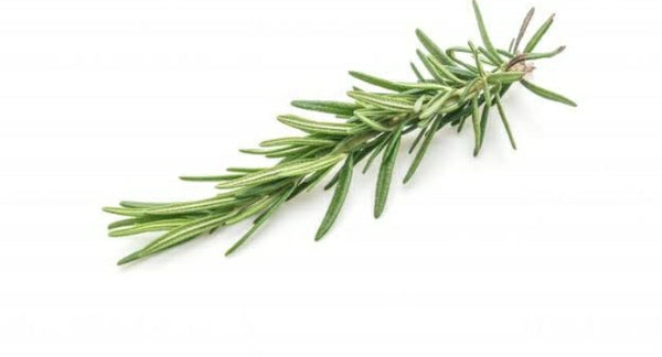 Rosemary (One Twig)