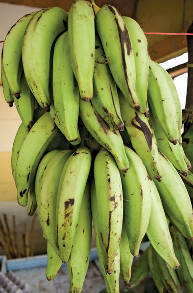 Plantain/2 - Bulk - For orders above N100,00 ONLY