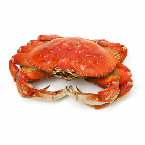 Fresh Crabs No Eggs Pack of 8