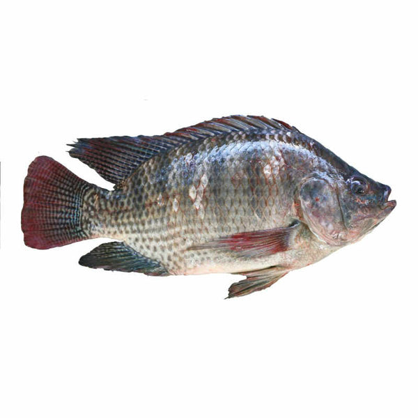 Fresh Tilapia Fish ( Approximately 2.5kg )