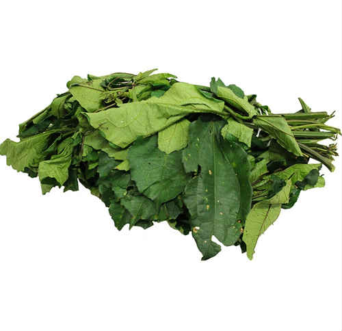 Ugu leaves