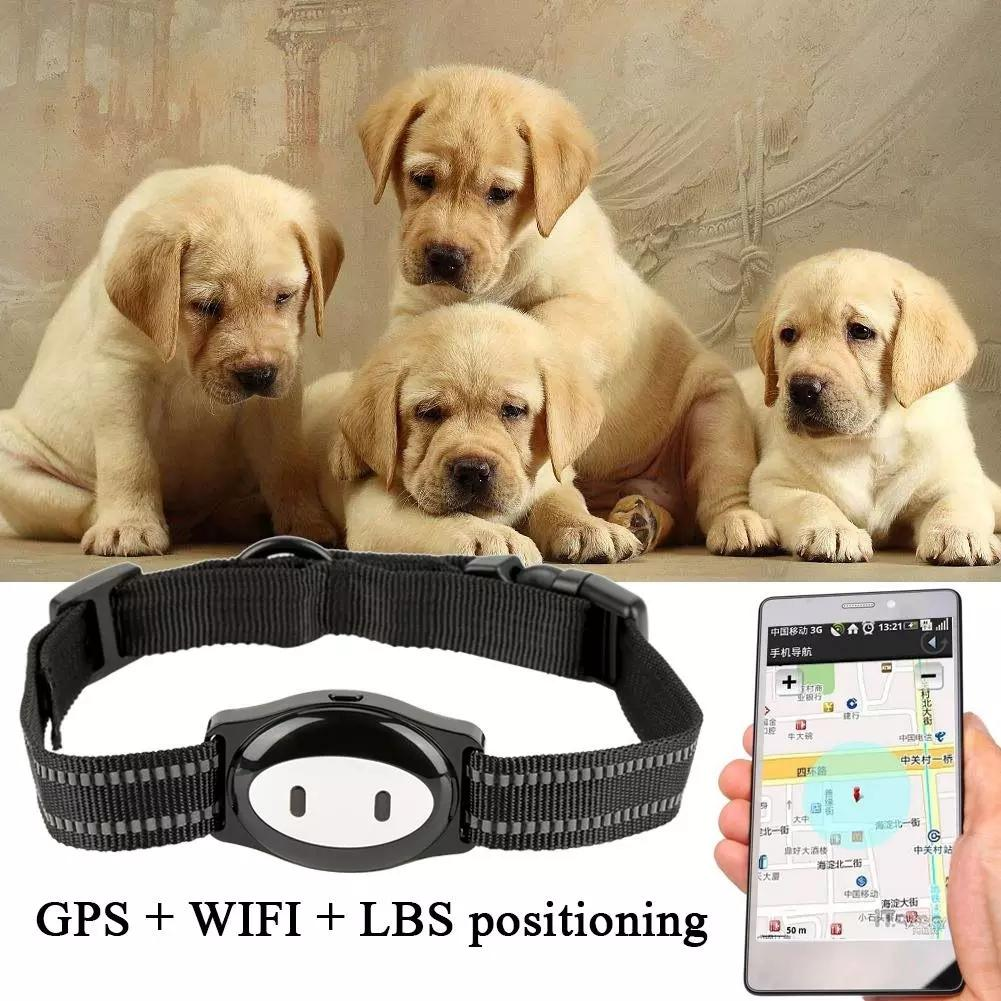 Dog GPS Tracker Monitor With Collar