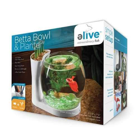 Betta Bowl And Planter