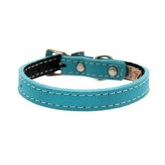 Tuscan Leather Dog Collar by Auburn Leather - Turquoise